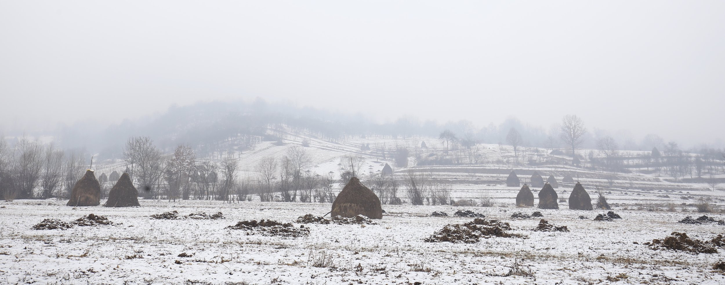 Haystacks in a snow covered field in Maramures.