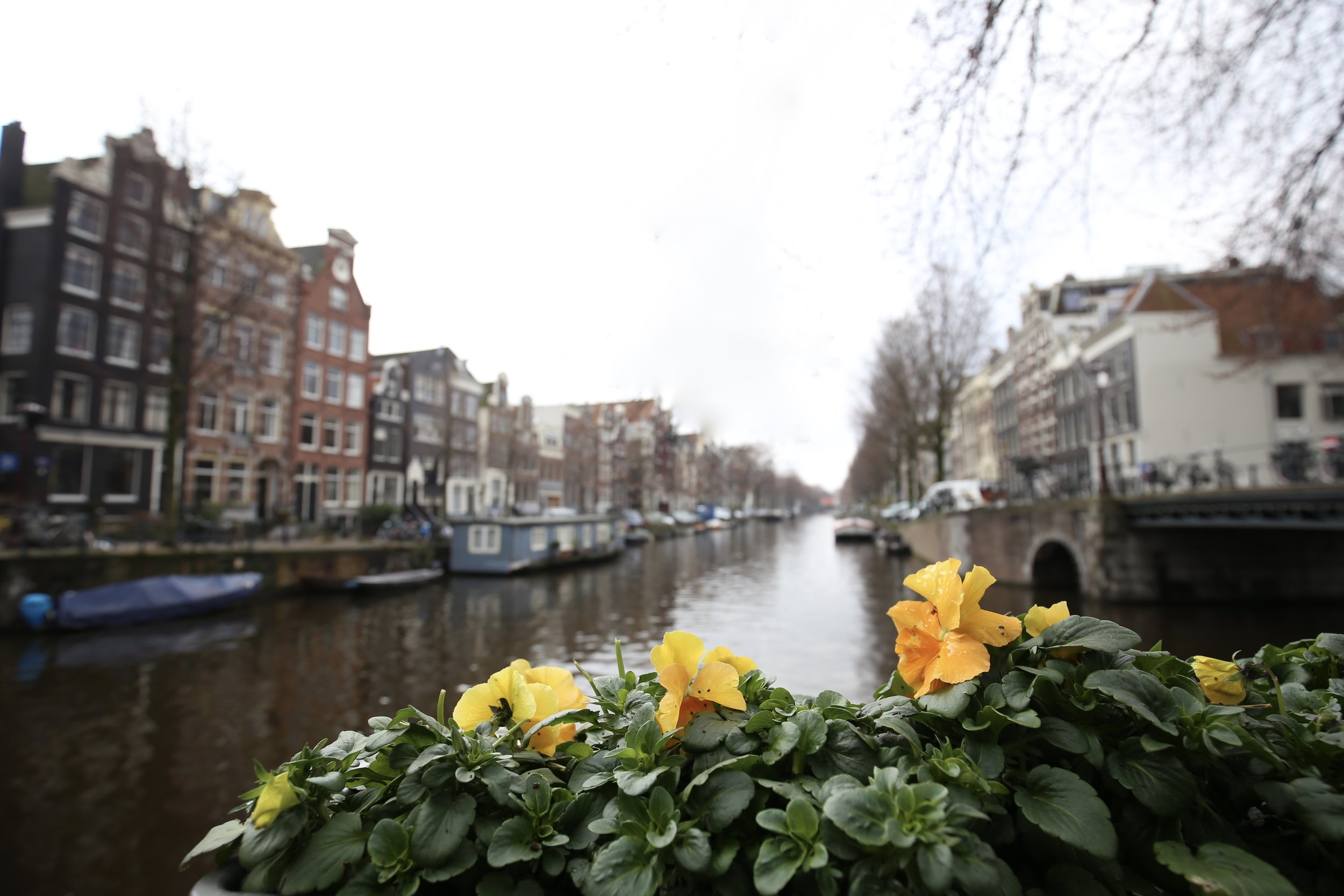 Flower boxes with pansies on a dreary day by the grey canals, Amsterdam.