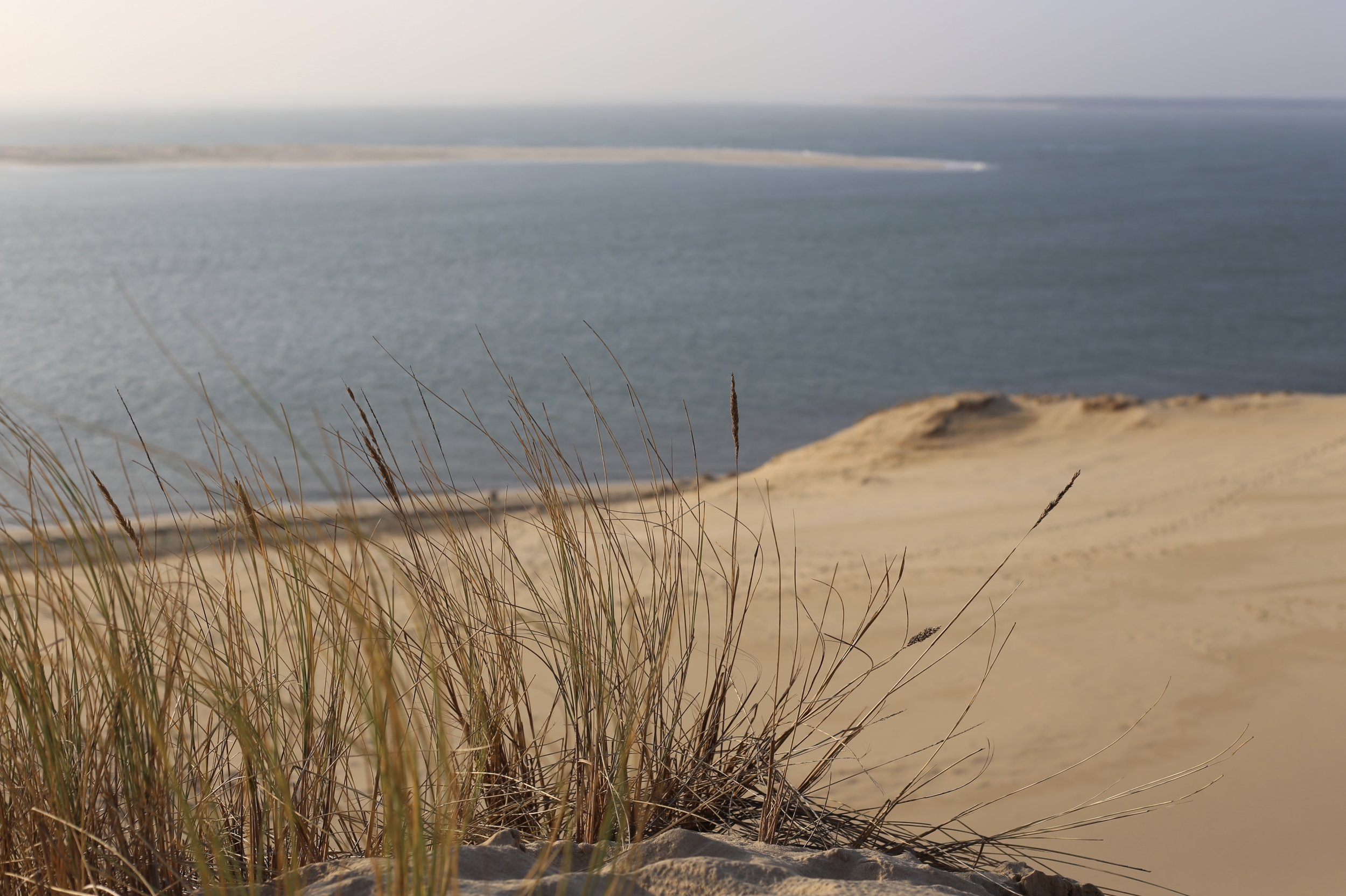 Grasses in the sand dunes, overlooking the sea.