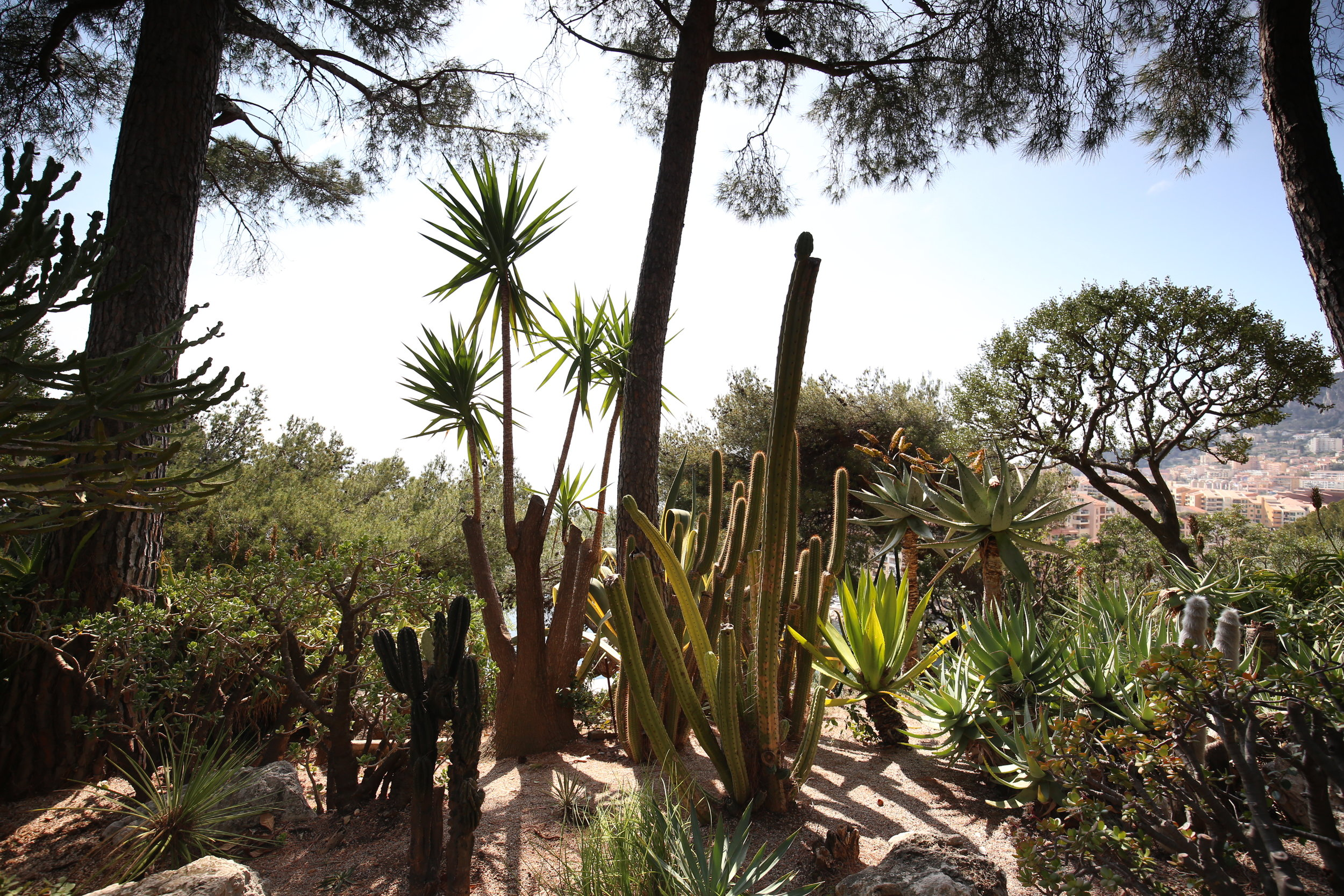 Brilliant cactus gardens in Monaco - with all different types of cacti.