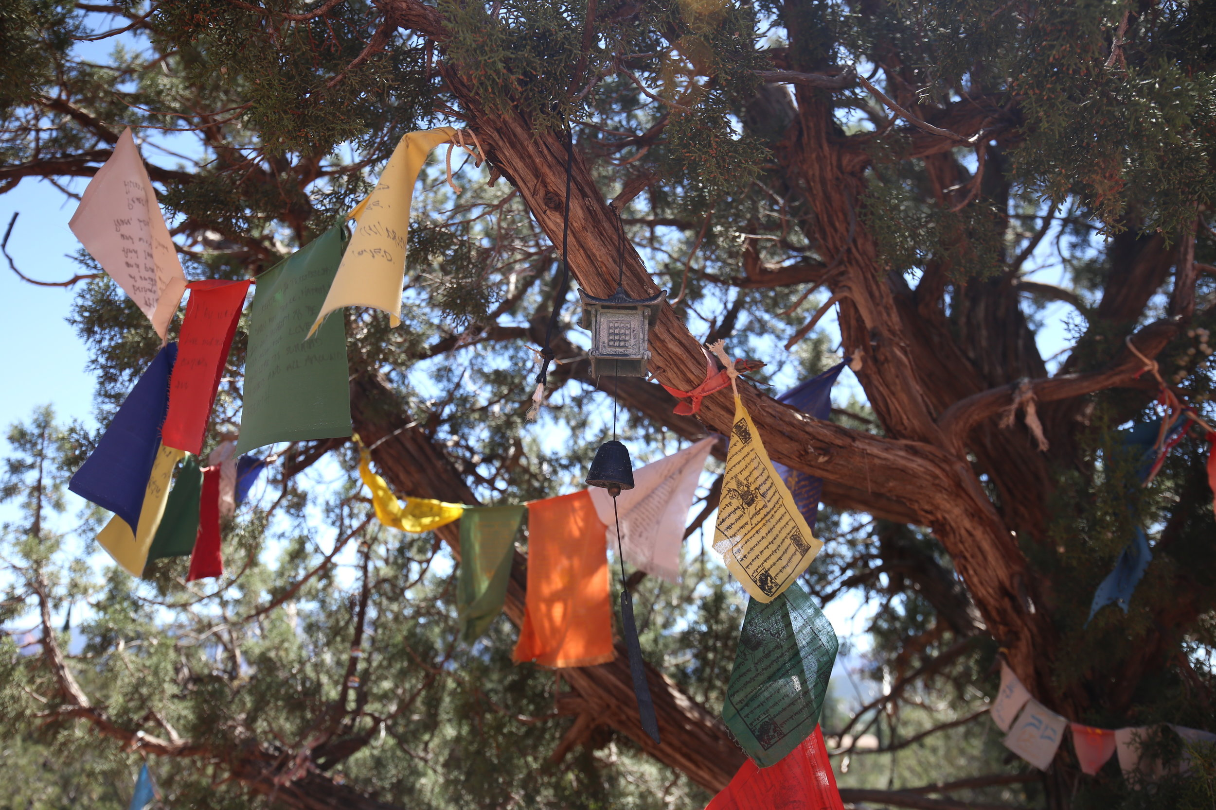 Small prayer flags on a pinion tree.