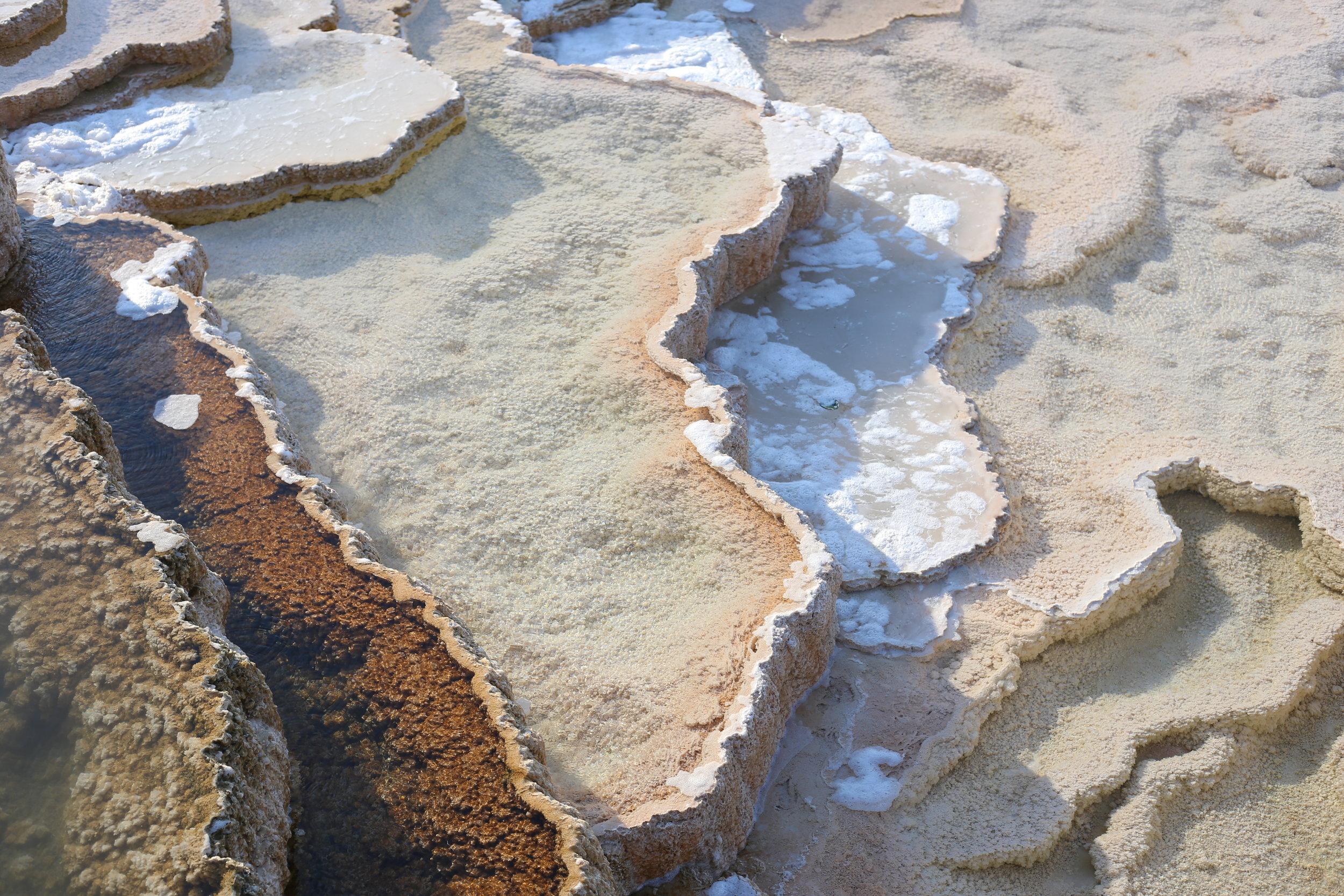 minerva's terraces yellowstone
