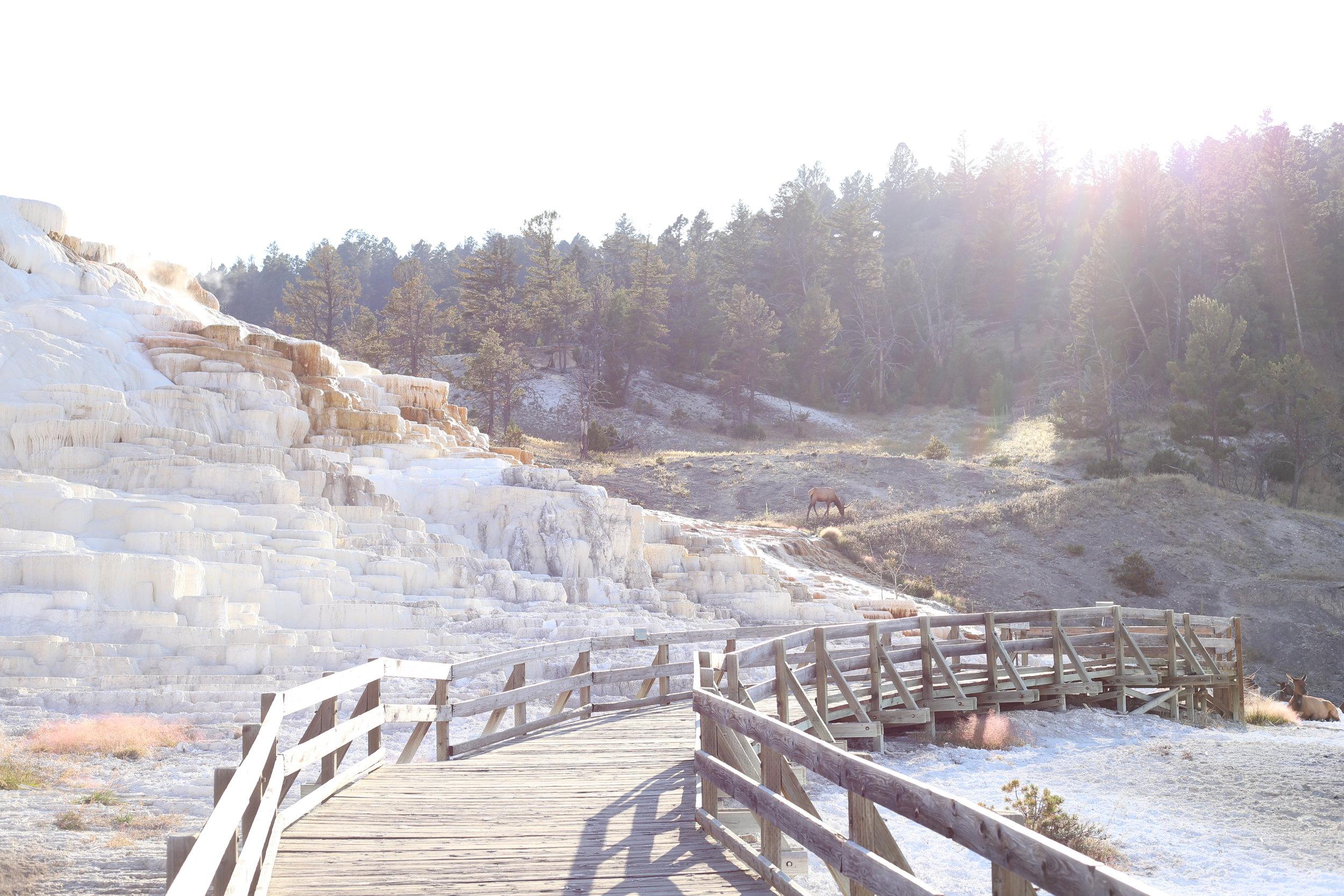 white terraces yellowstone park