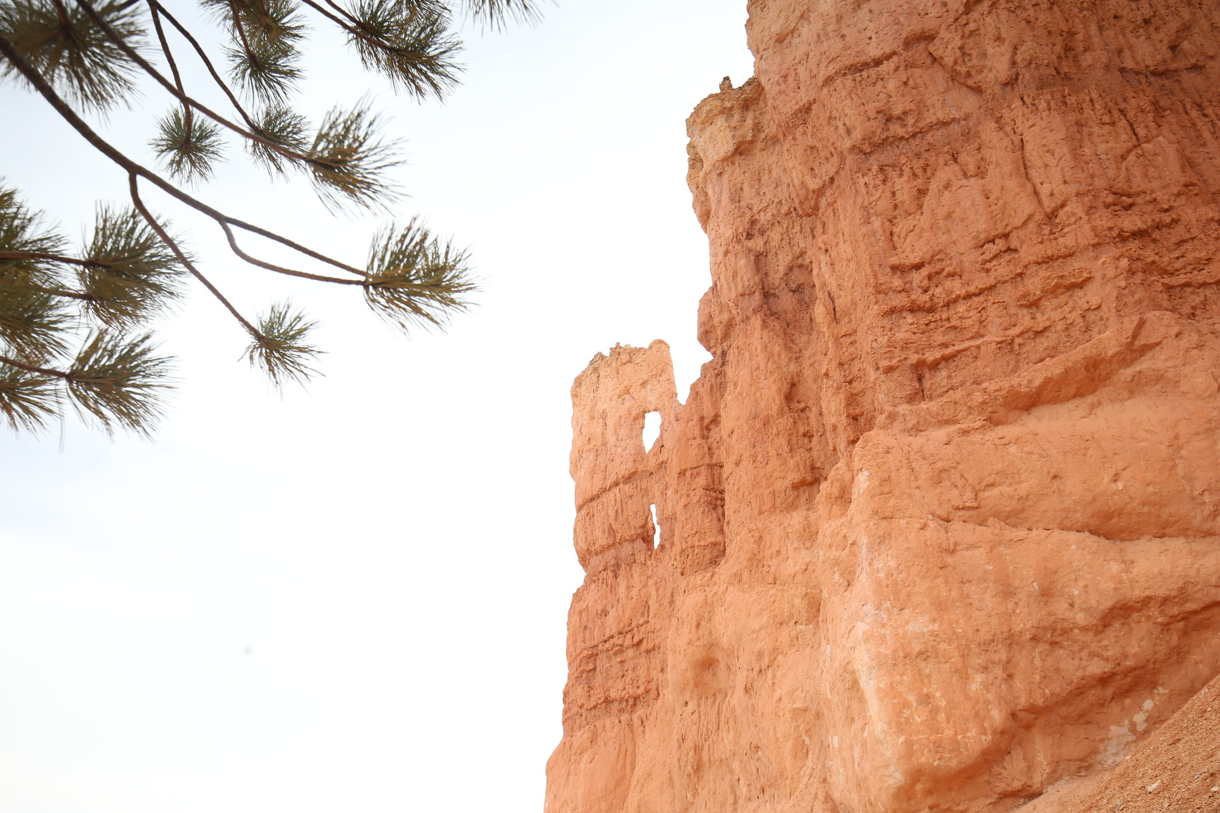 bryce-canyon-pines