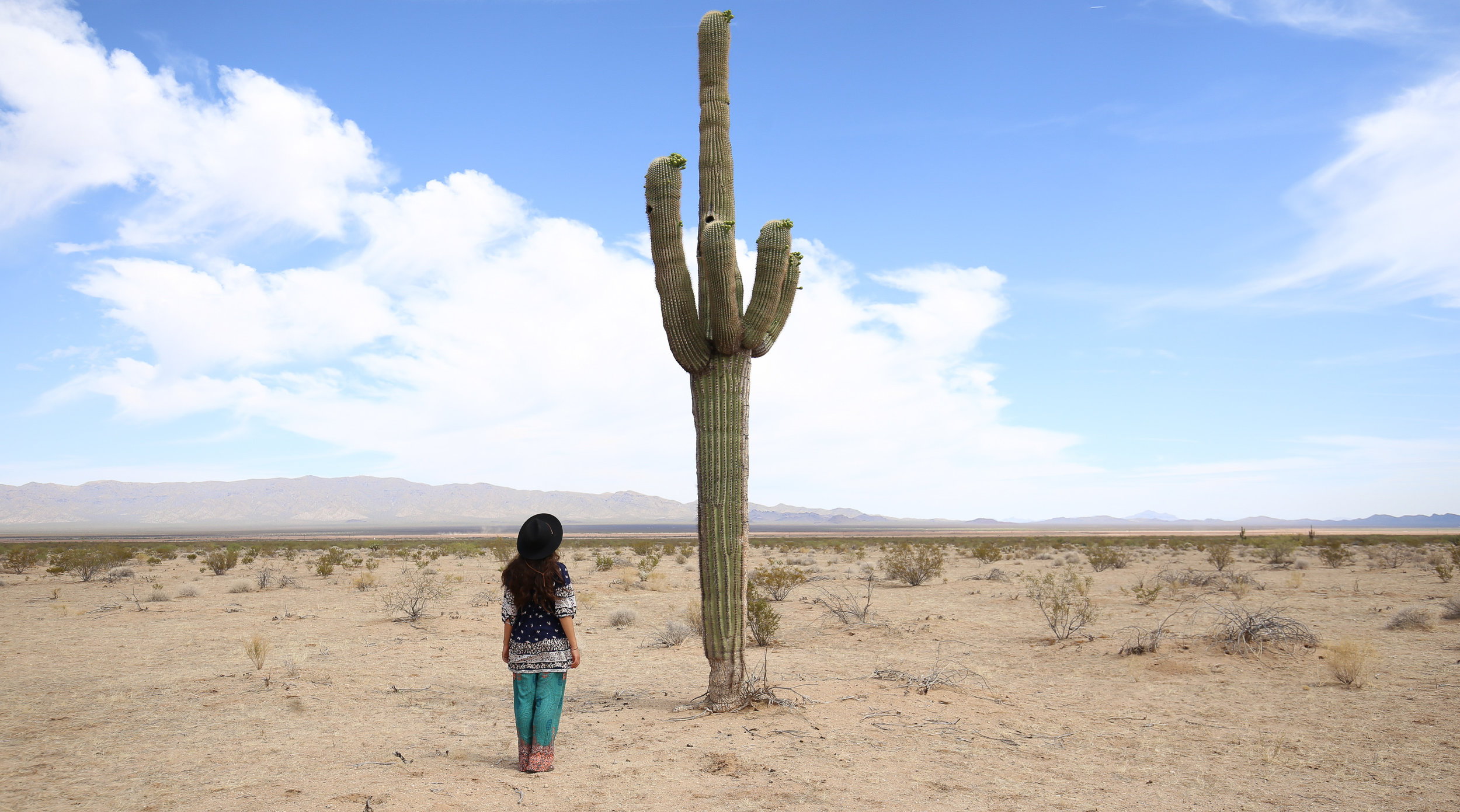 saguaro-cactus-middle-of-nowhere