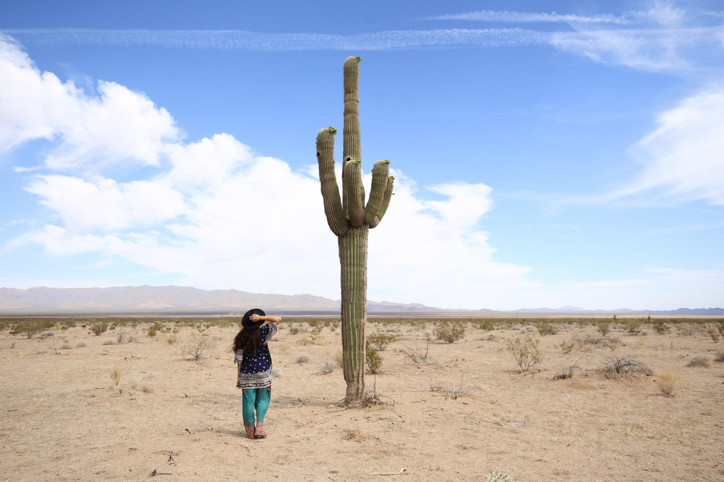 saguaro-compared-to-human