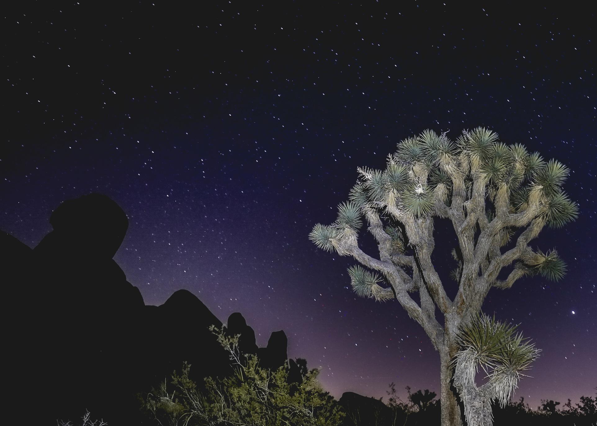 joshua-tree-starry-sky