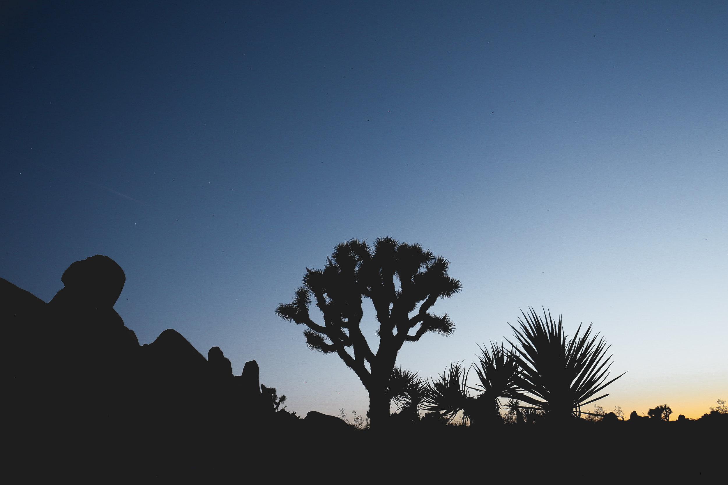 joshua-tree-sunset