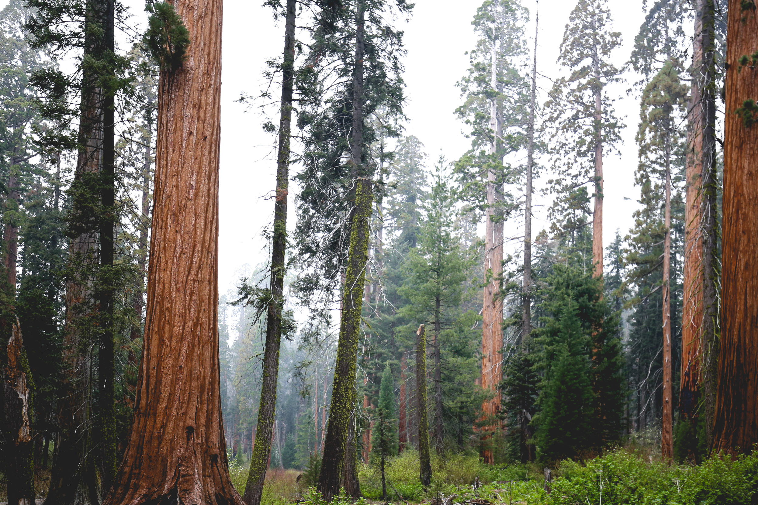 kings-canyon-forest