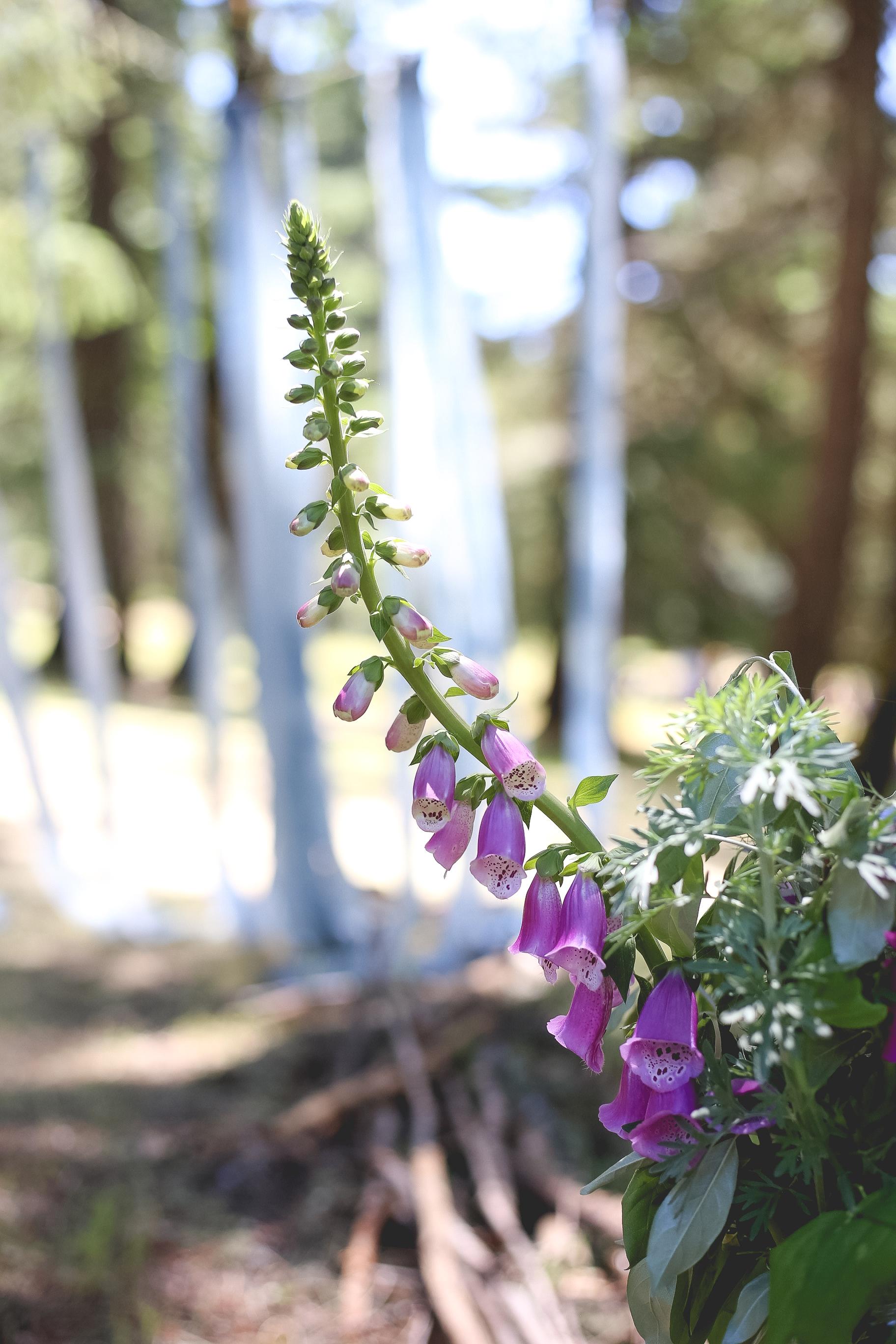 foxglove-bouquet