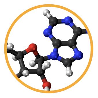 xNucleotide.png