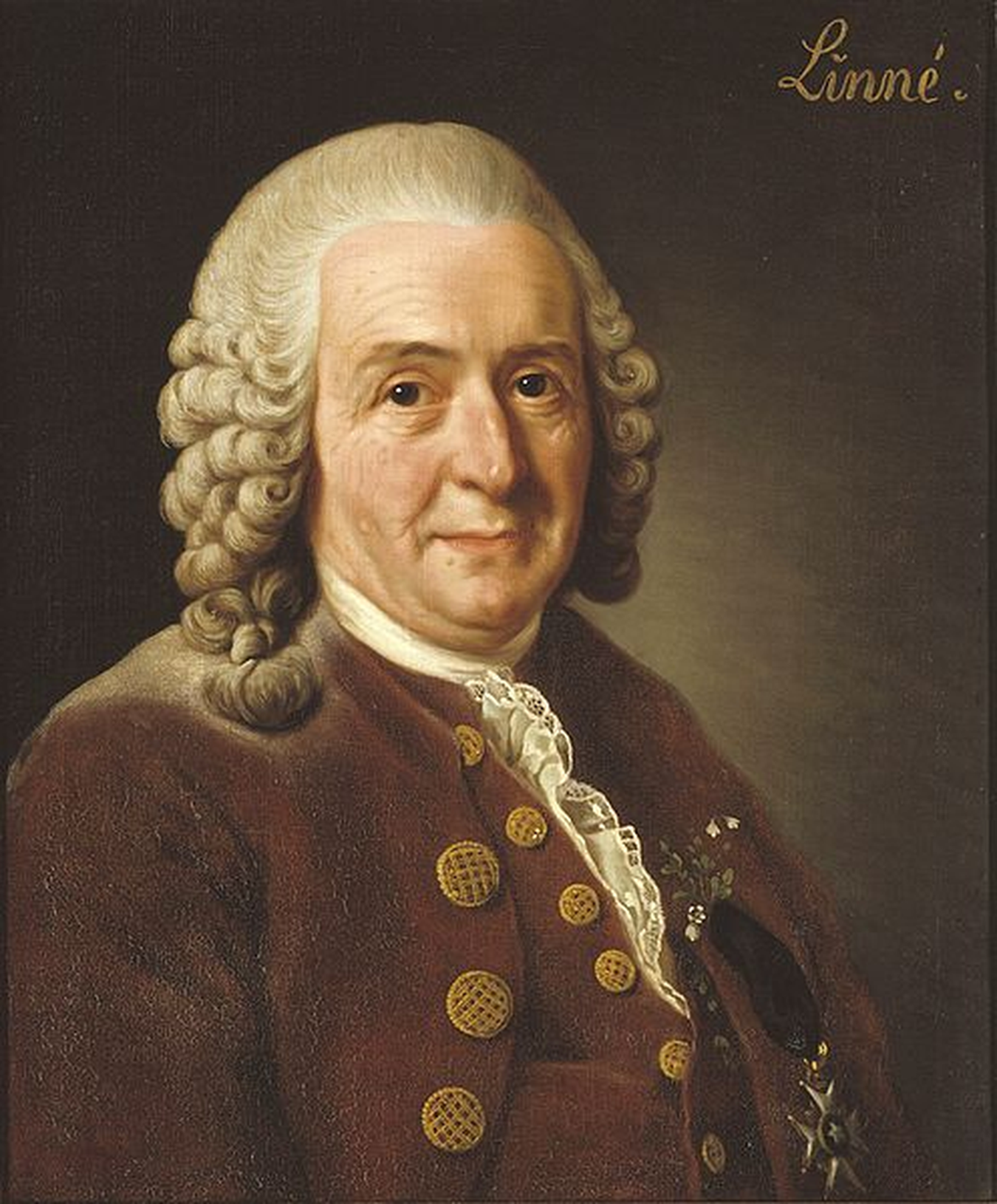 According to the paper,Carl von Linné, the Swedish botanist and father of taxonomy, would be a computational biologist today.  Image credit:  Nationalmuseum Stockholm .