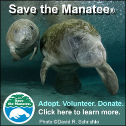 Save The Manatee website
