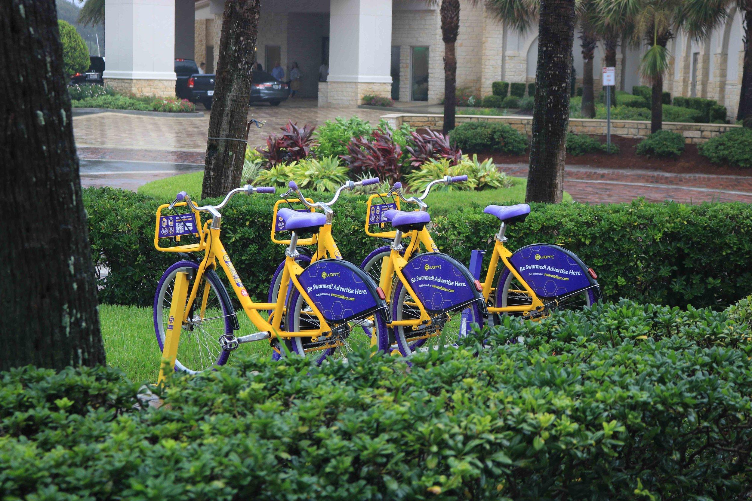 Bike Rental Program at Lemon Bar