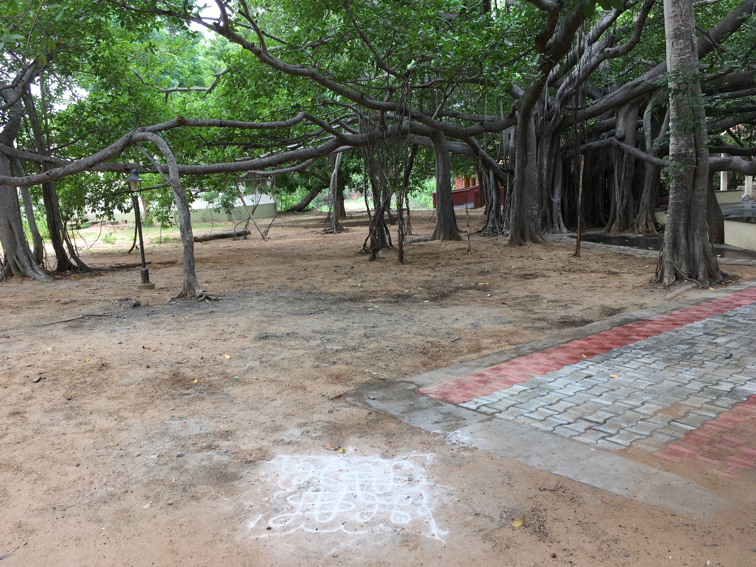 Ragnoli in front of a banyan tree at the Kalakshetra Foundation (a traditional performing arts school in Chennai).