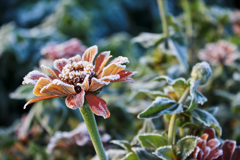 first-frost.jpg