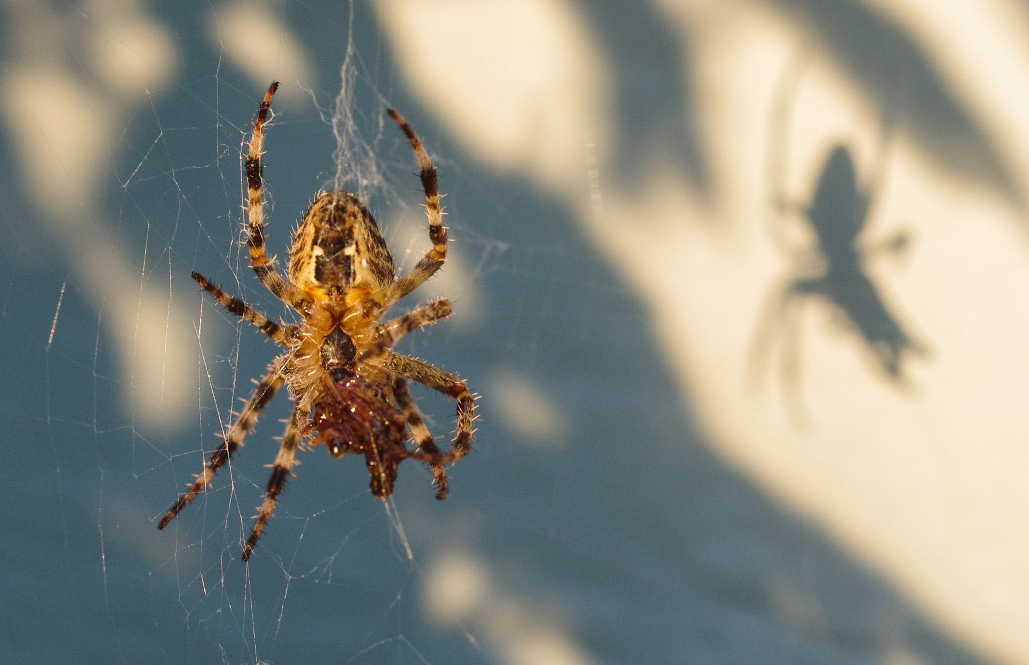 Spider and Shadow.jpg