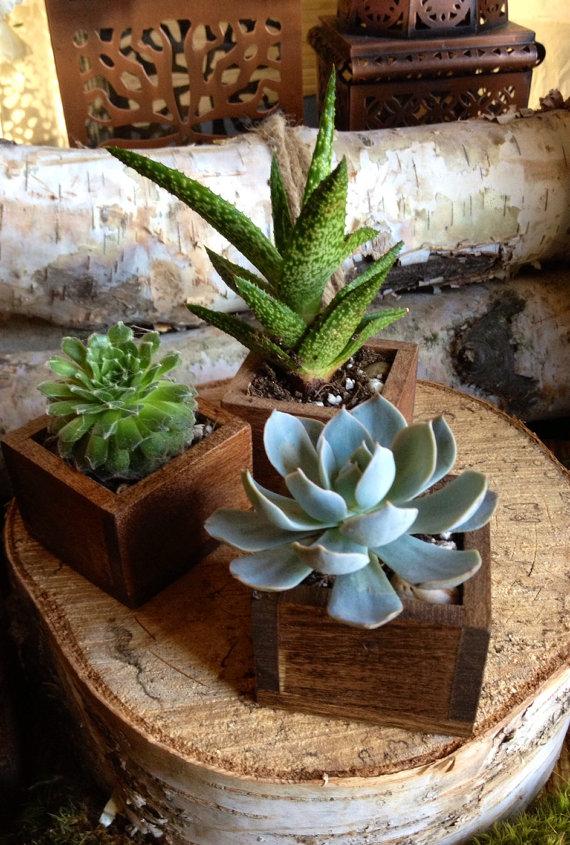 Succulent and Planter  - Etsy TheRedLilyShop.jpg