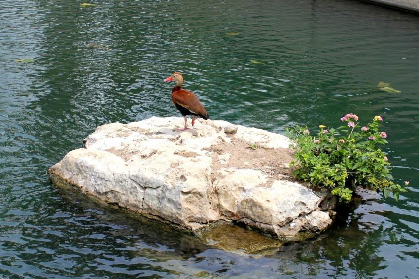 San Antonio Riverwalk 3.0.jpg