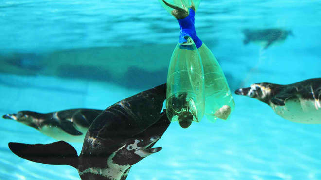 Zoo keepers at ZSL put their final plastic bottles to good use: instead of the bin, they get recycled as a floating feeding puzzle.