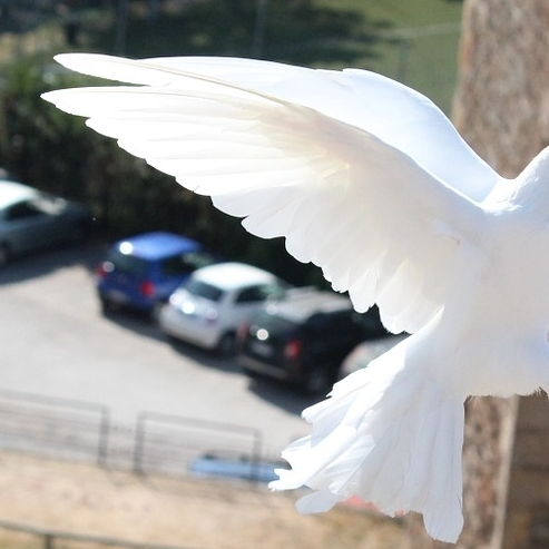 bird-465816_1280.jpg