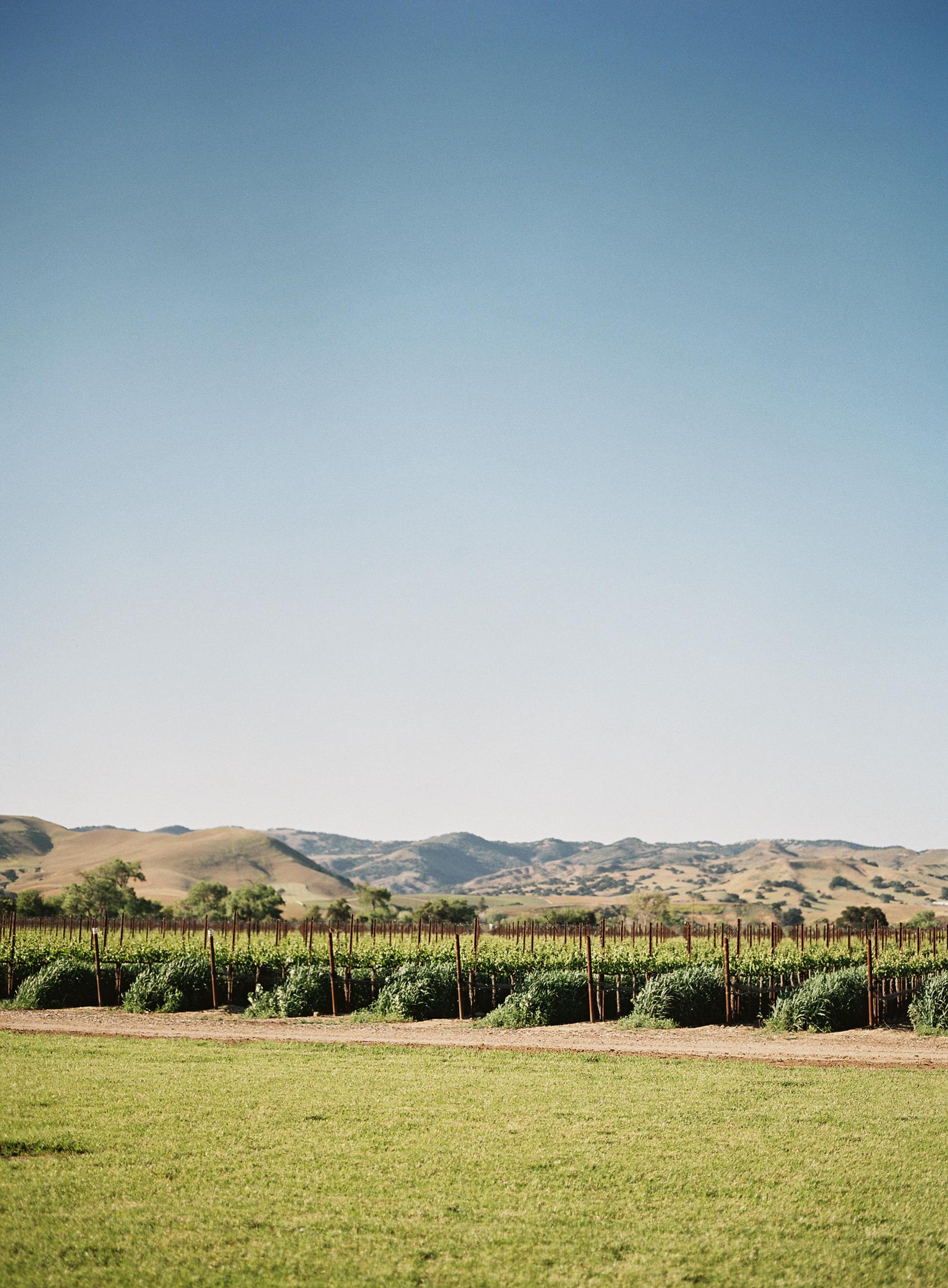 vineyard_Santa-Ynez_valley.jpg