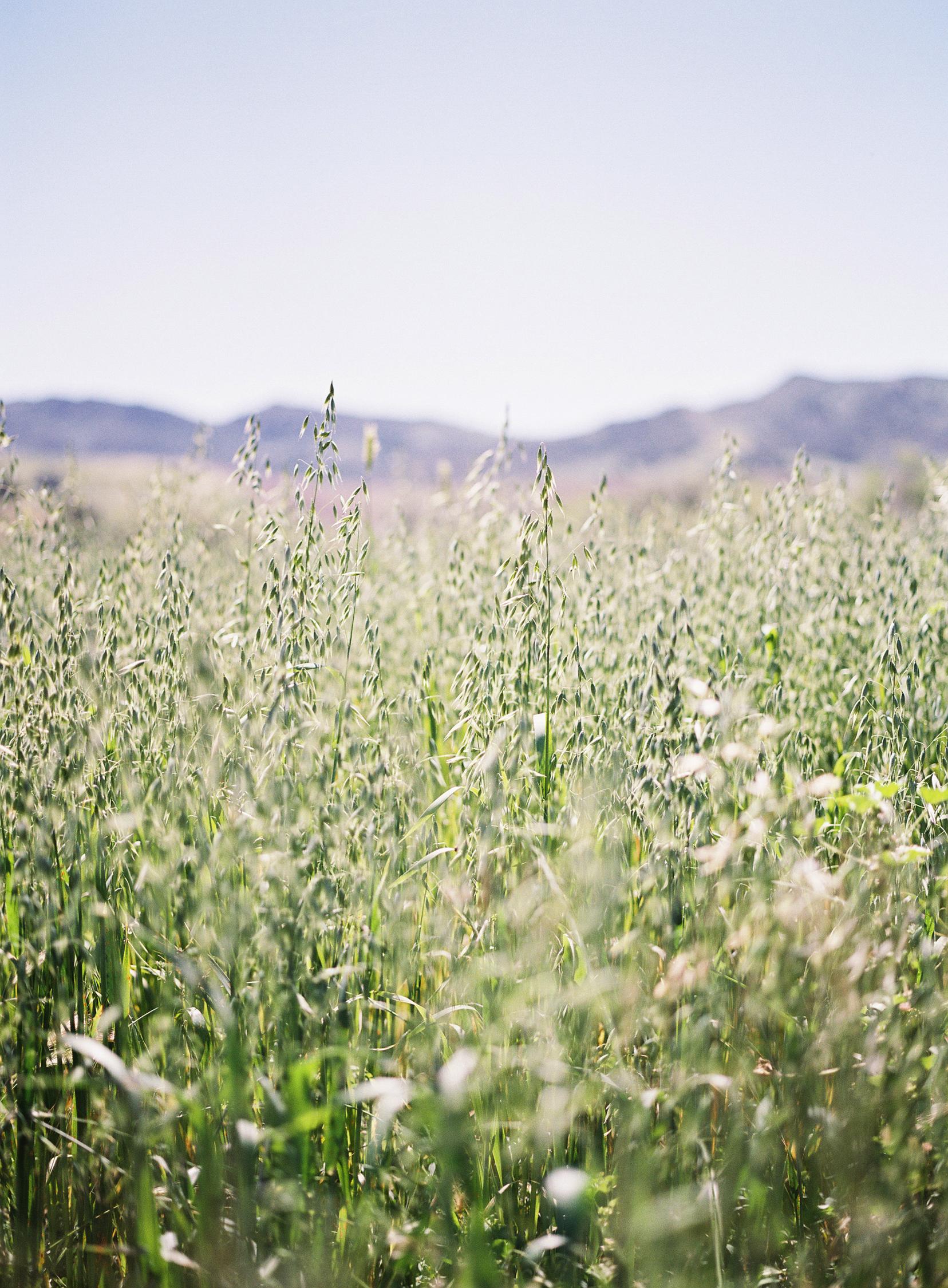 tall grass041616_2567_009975-R1-001.jpg