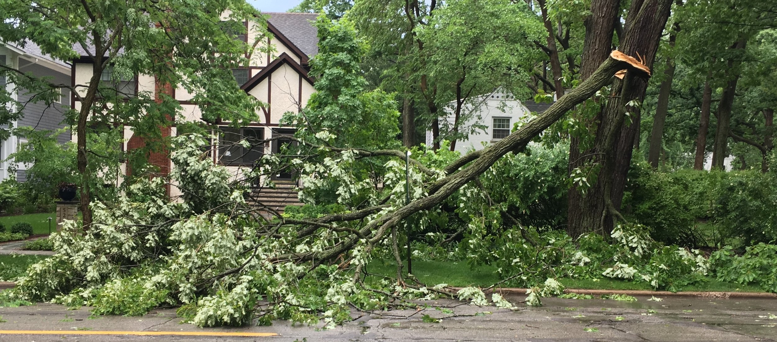 Tree damage due to a microburst over Chicago