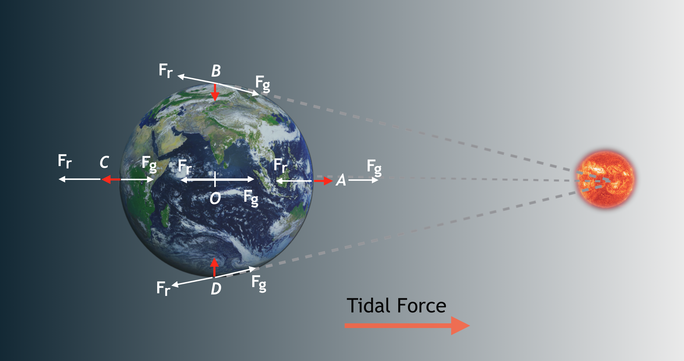 Artist's impression of how tidal forces are generated in the Earth-Moon system