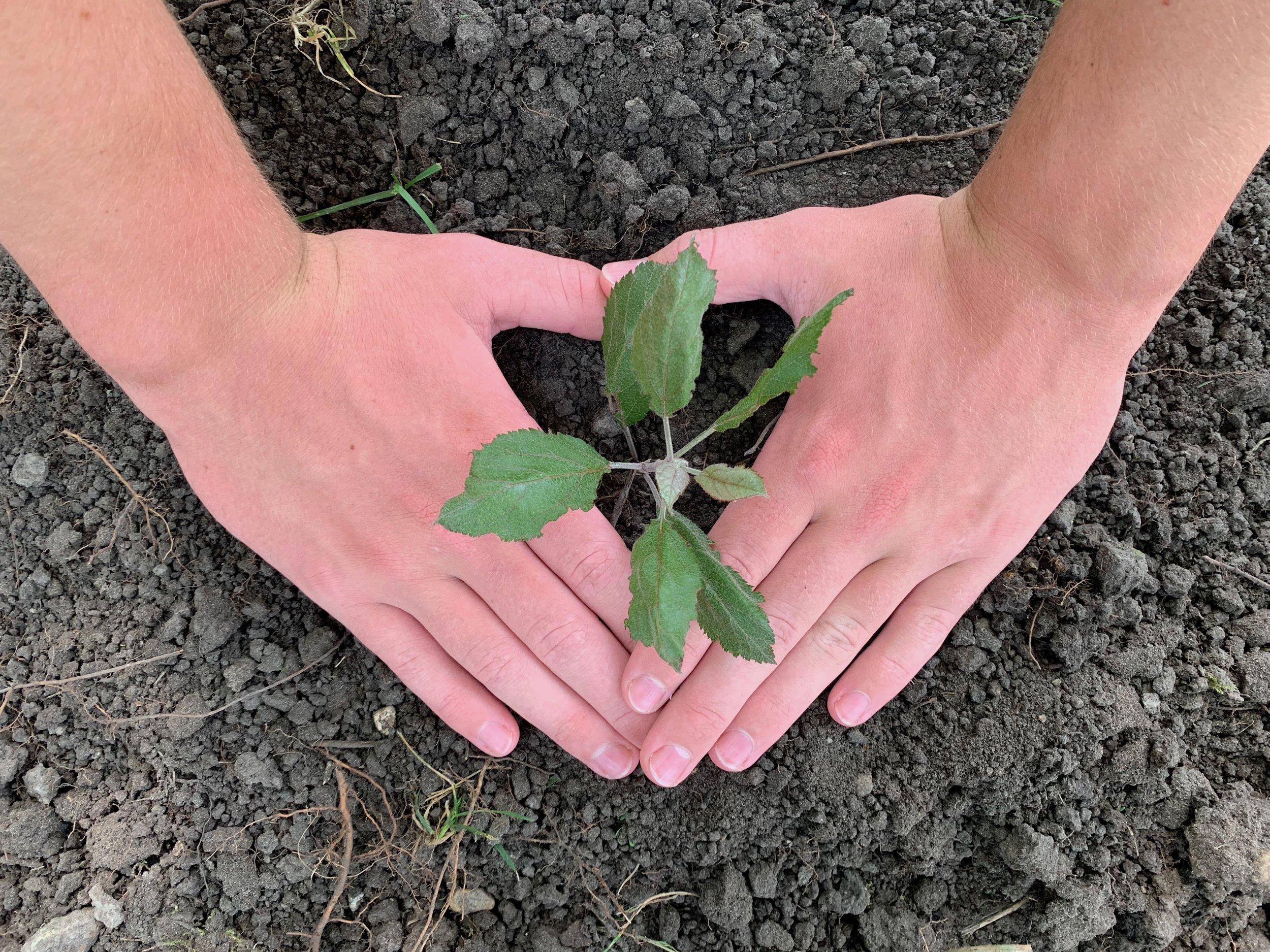 Planting sapling.jpg