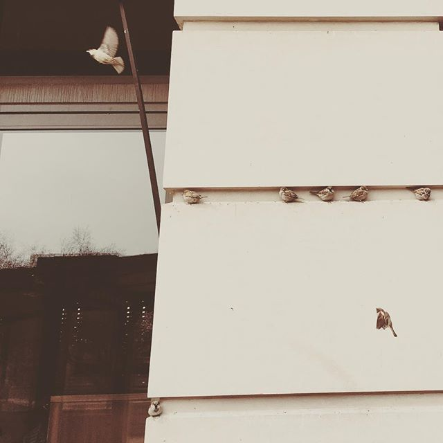 A room of one's own  #bird #birds #perch #chicago #igers_chicago #chigram #chigrammers #artofchi #april #cold #spring #loop #theloop #flight #midflight