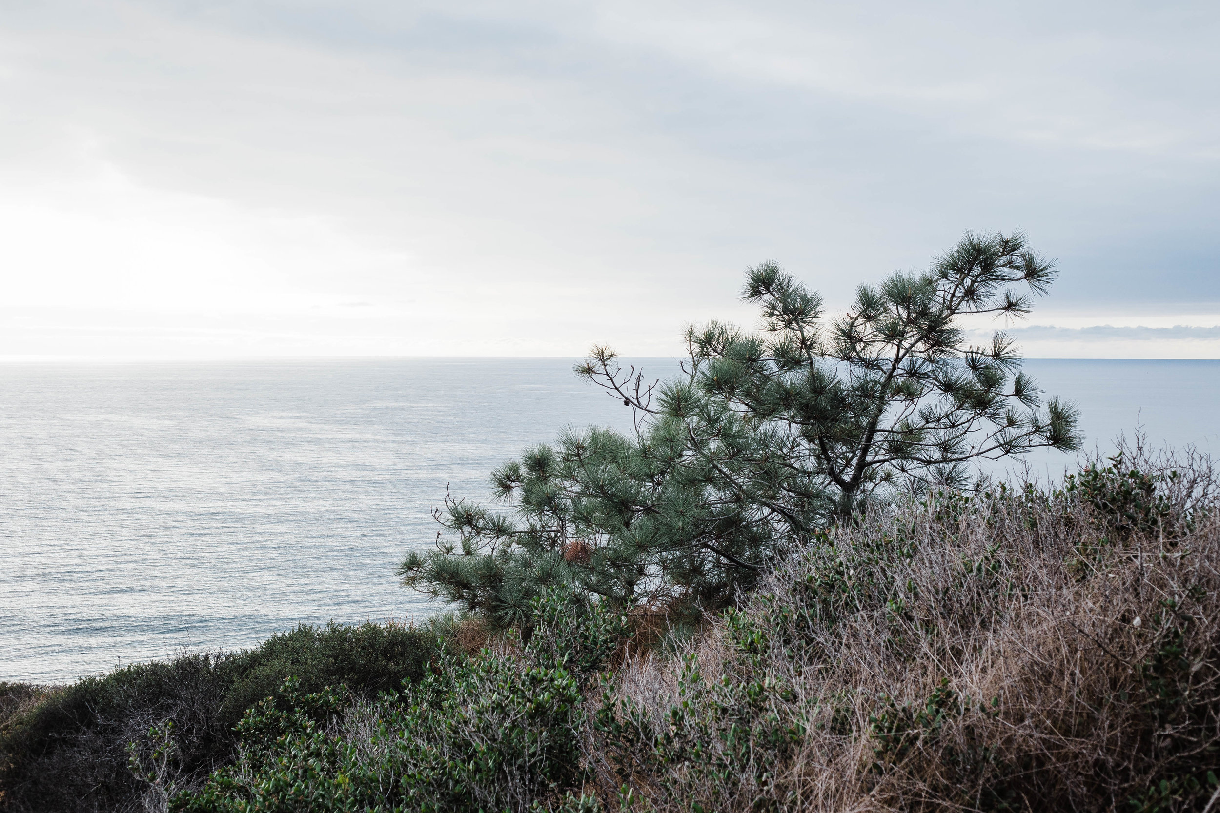 The Mission - Read about the purpose of the Native Plant Project