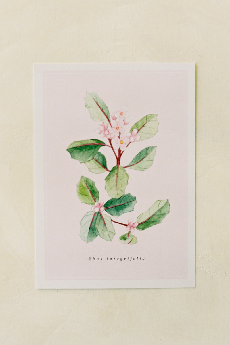 melanieosoriophotography_Watercolor-Botanical-Illustration_California-Native-Plants_Postcard_Lemonade-Berry_Rhus-integrifolia
