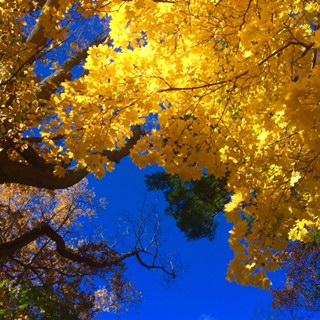 sun on leaves.jpg