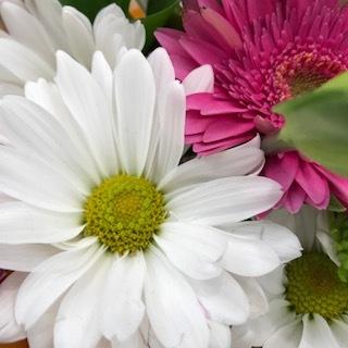 wht daisy.JPG