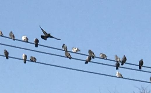 birds on wire.jpg