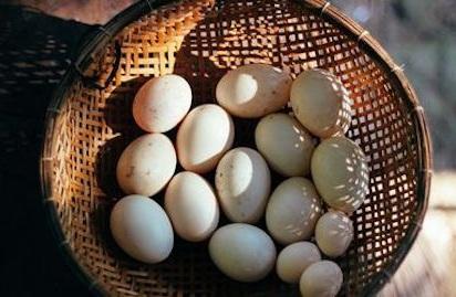 egg-basket-517891104-57f967c75f9b586c35774083.jpg