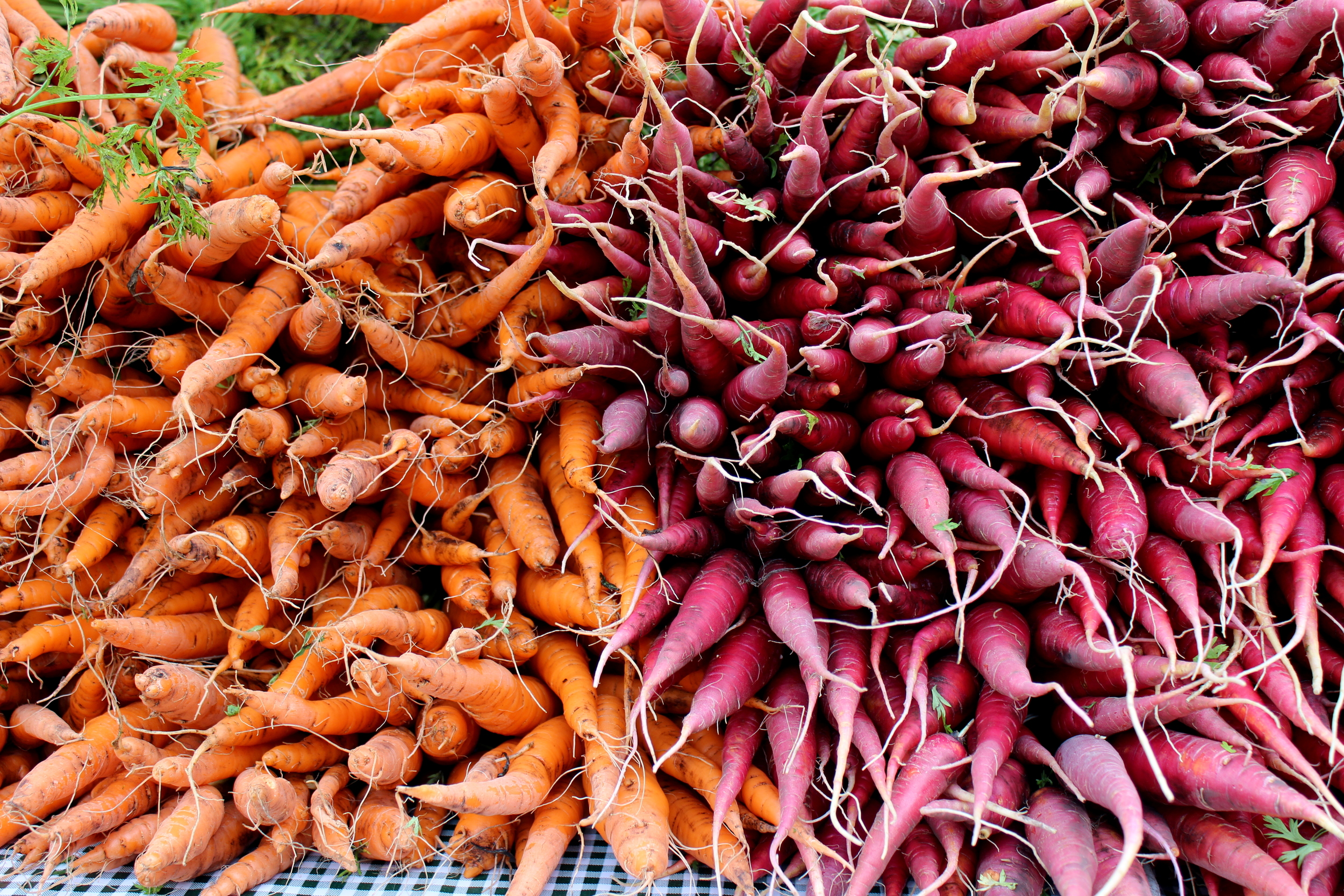 Fall scenes at the farmers' market for zero waste, seasonal grocery shopping | Litterless