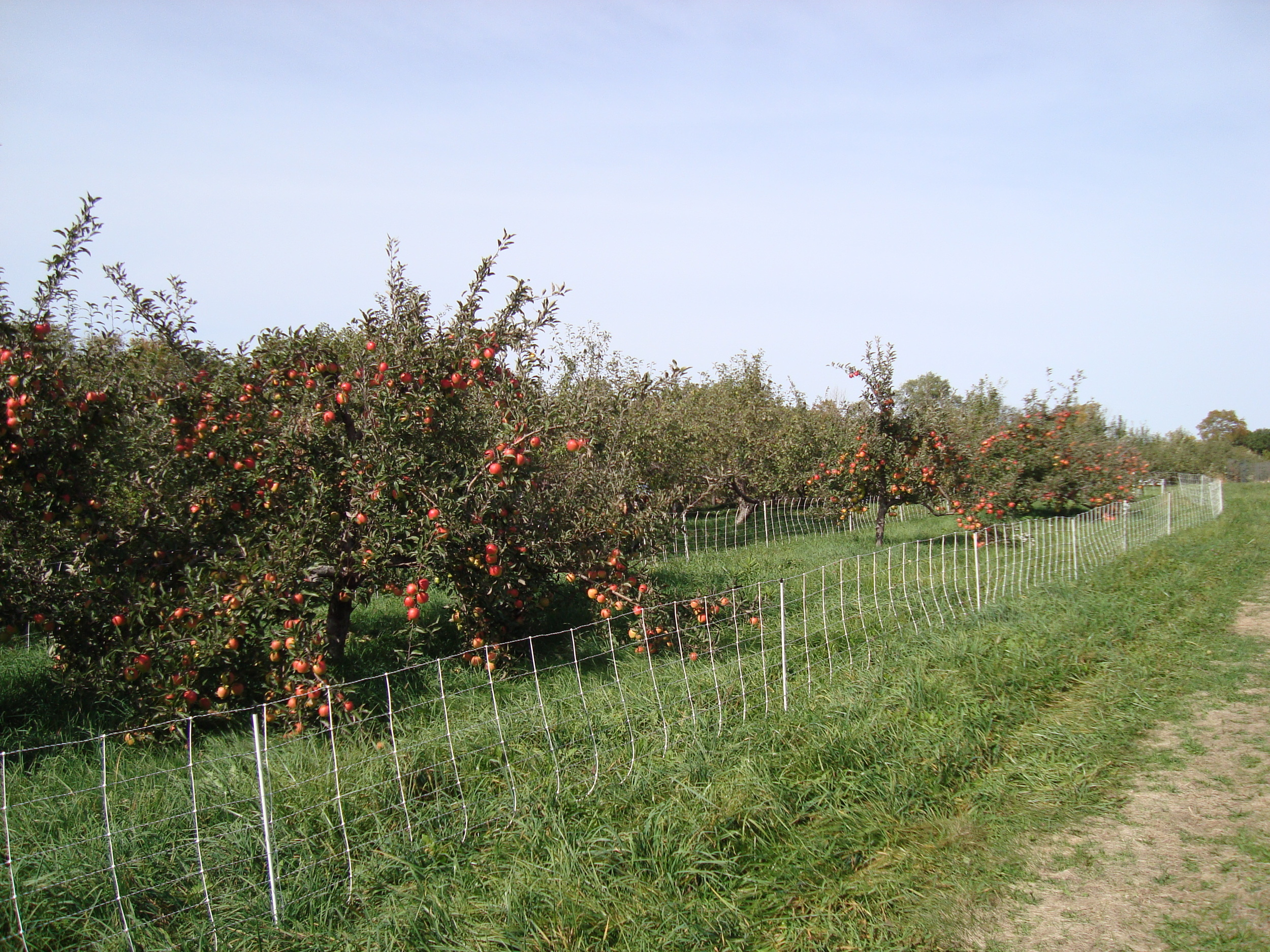 Apple picking for a simple, seasonal fall activity | Litterless