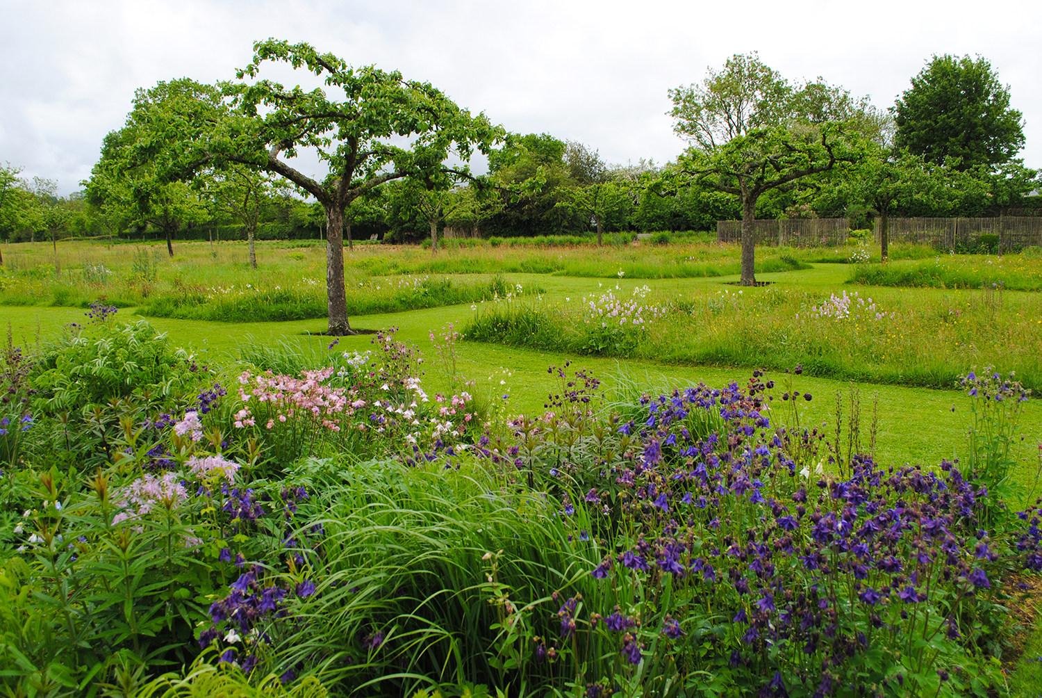 A view of the orchard and the meadow patches. A perennial bed featuring Aquilegia (columbine) is in the foreground.