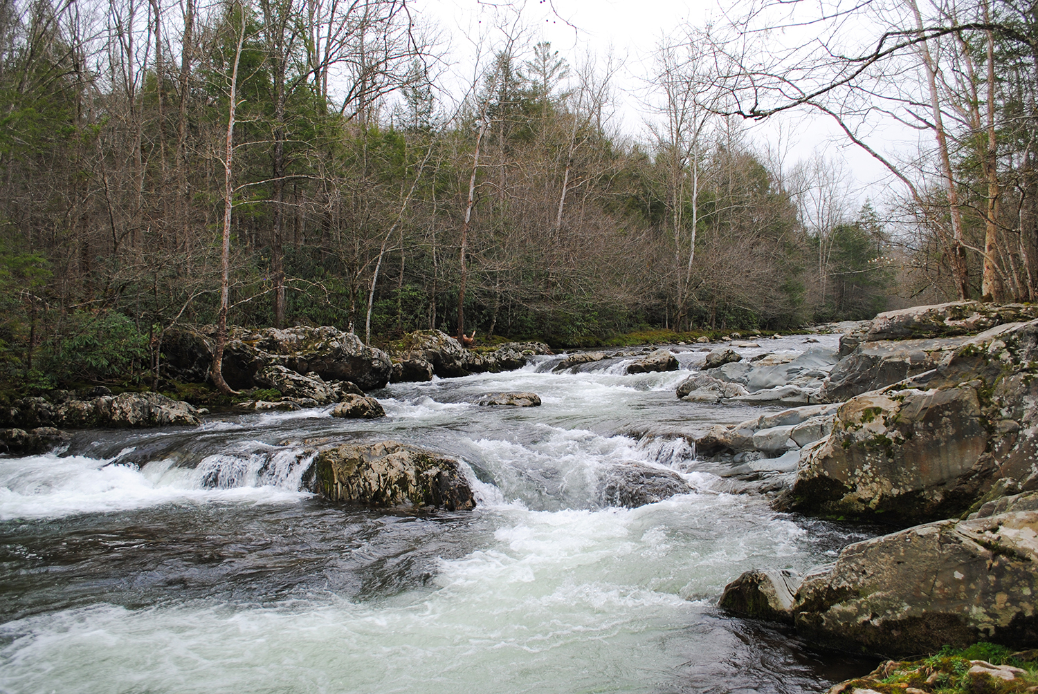 The Little Pigeon River gurgles through Greenbrier.