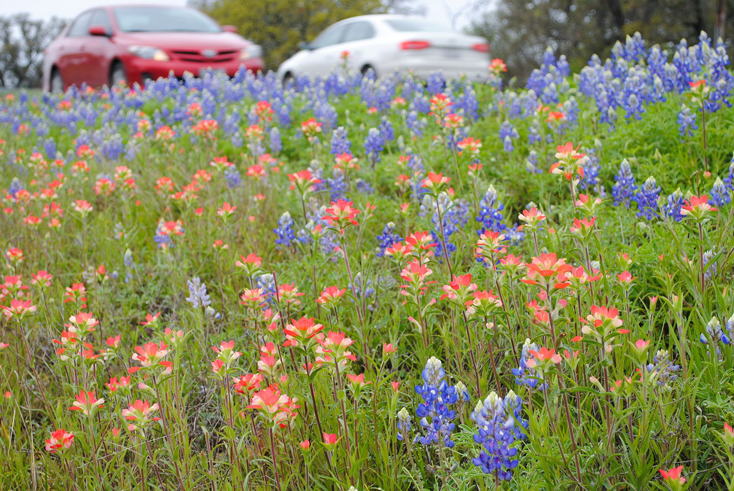 The blur of haste juxaposed with the focus of wildflowers.