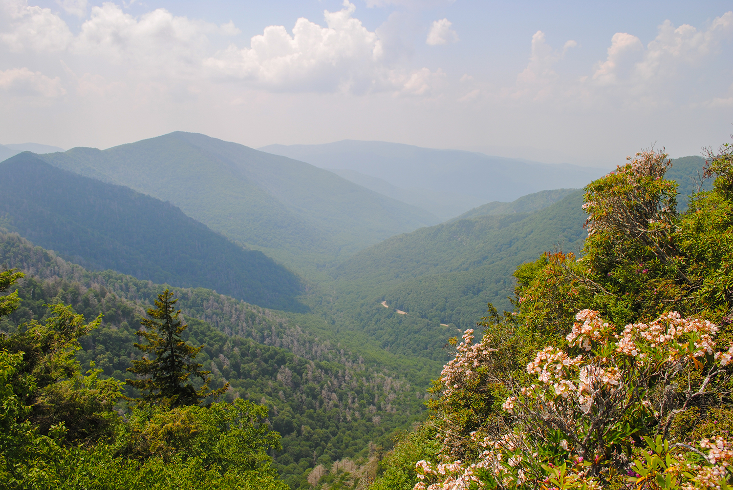 Looking down from Chimney Tops. The Ericaceous  Kalmia  (mountain laurel) on the right are hints of other blooming plants to come.