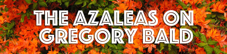 the-azaleas-on-gregory-bald-header.jpg