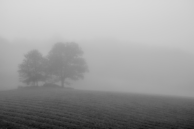 2015-0926-004 foggy field-LRPS.jpg