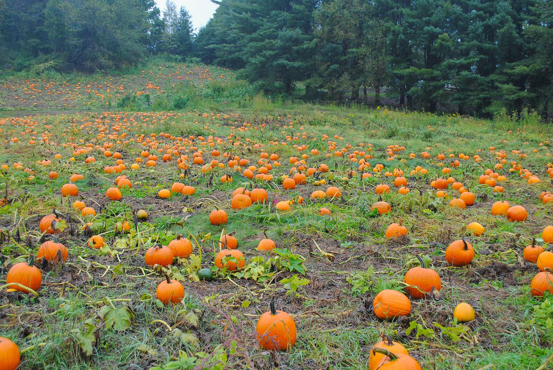 2015-0926-010 pumpkin patch-LRPS.jpg