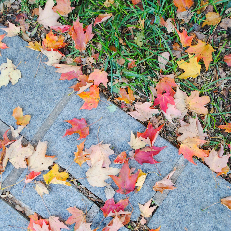 2016-1012-023 fallen leaves-LRPS1x1.jpg