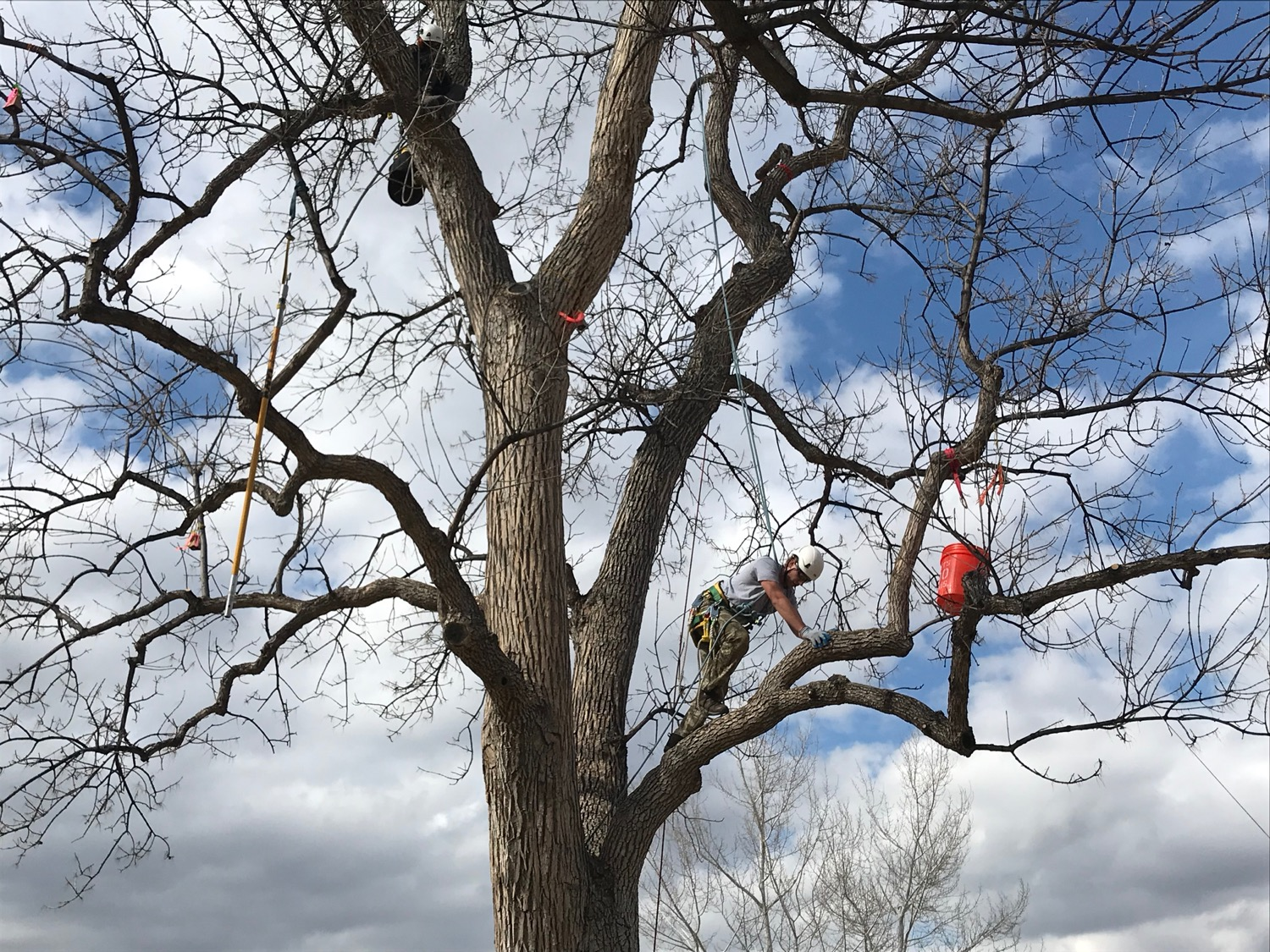 There's also arboriculture where students can show off their climbing skills.