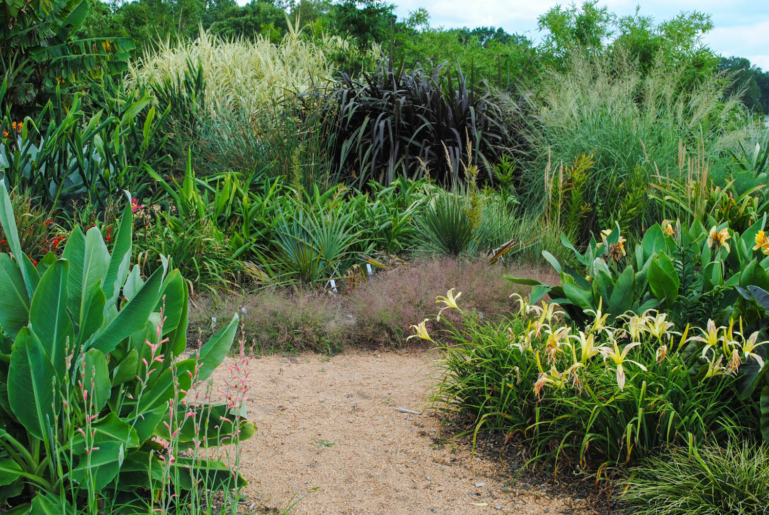 The monocot garden at the JC Raulston Arboretum was rich with texture and color in mid-July.