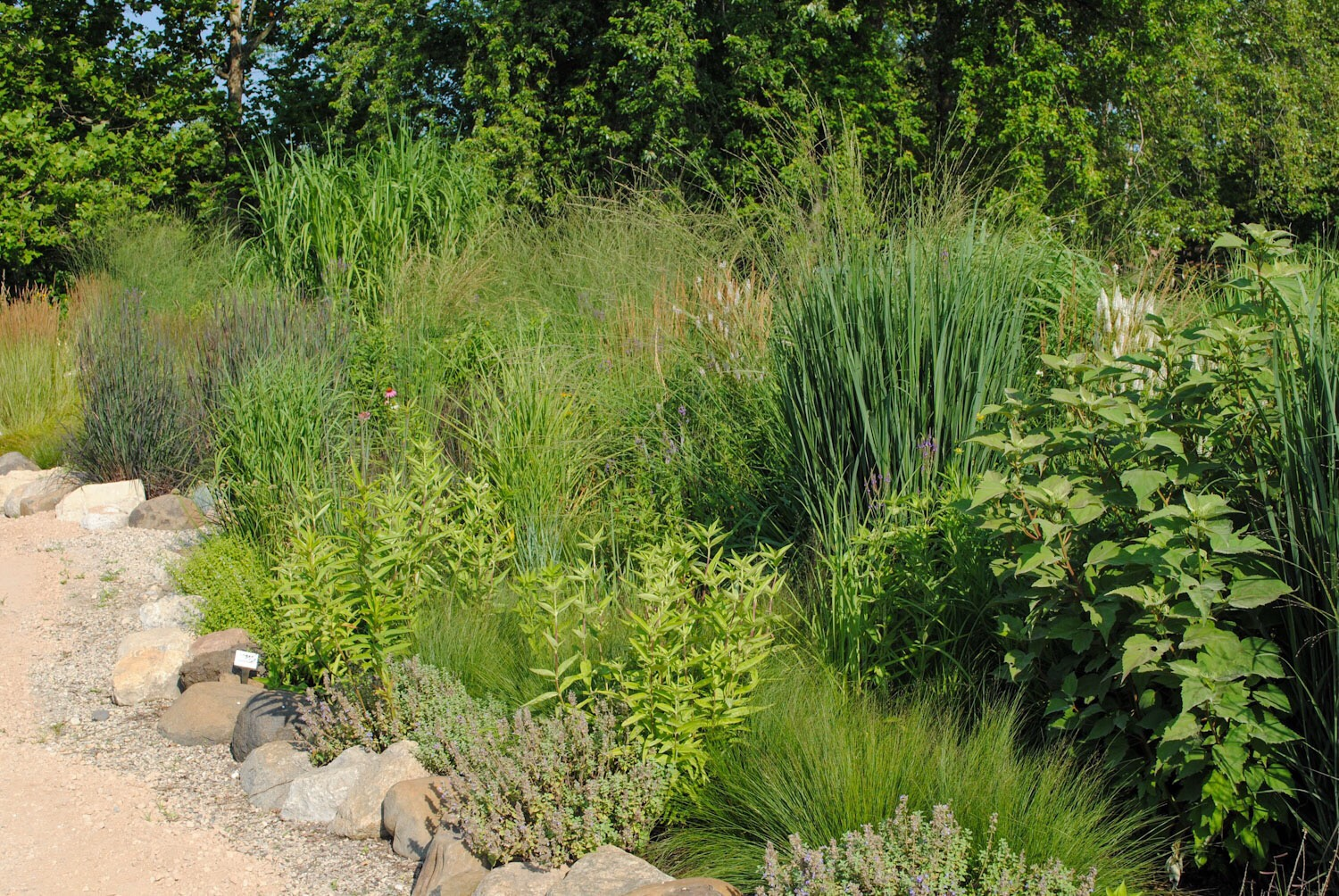 The Grass Garden, a planting where he evaluates members of the Poaceae.
